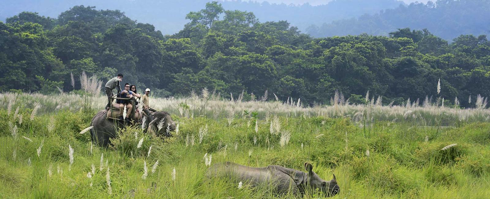 Chitwan National Park Jungle Safari Tour